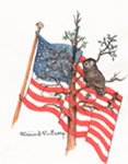 Owl and Flag